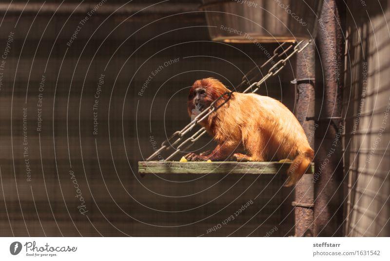 Natur rot Tier Wildtier gold Zoo