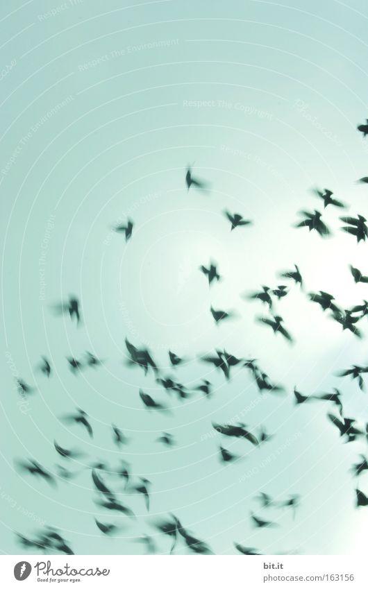 WIRBELWIND Himmel Herbst Bewegung Wärme Luft Vogel Wind fliegen Tiergruppe Mitte Konzentration Sturm drehen Gewitter Froschperspektive Dynamik