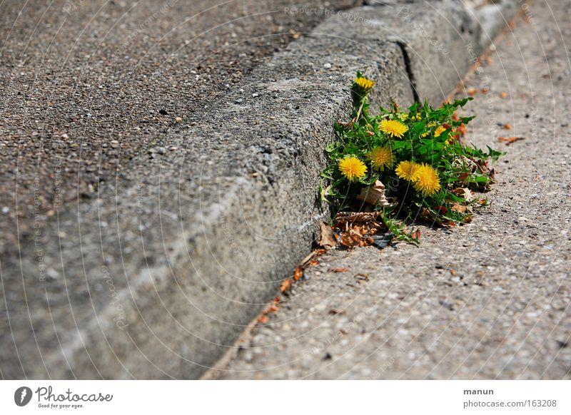 Randgruppe Natur gelb Straße Leben Frühling Kraft Straßenverkehr Umwelt Erfolg Kraft Wachstum mehrere Ecke Wandel & Veränderung Asphalt Lebensfreude