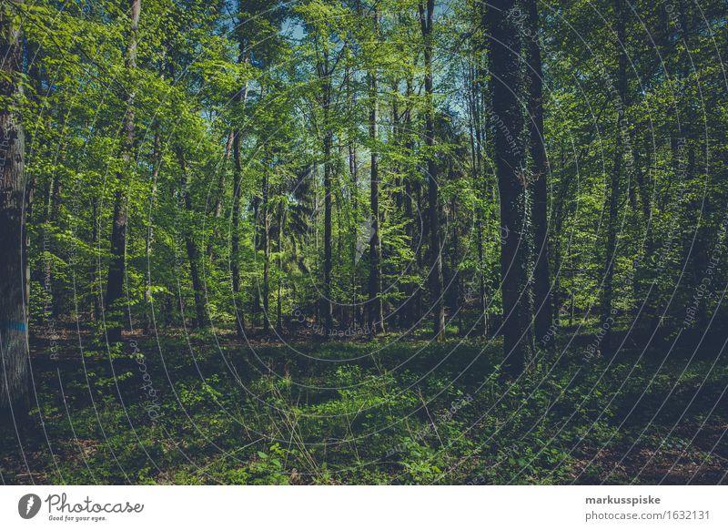 wald Freizeit & Hobby Spielen Ferien & Urlaub & Reisen Tourismus Ausflug Abenteuer wandern Essen Umwelt Natur Landschaft Pflanze Tier Klima Schönes Wetter Baum
