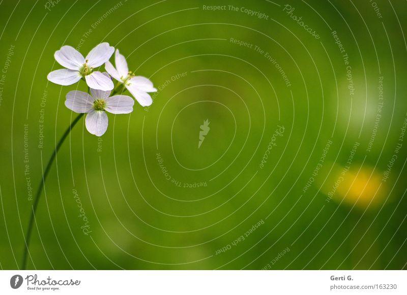 born to be mild schön Blume grün Wiese Blüte Frühling zart Stengel fein dezent filigran Lichtpunkt Wiesenblume