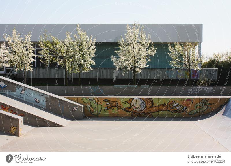 Die Ruhe vor dem Sturm Baum Sommer ruhig Einsamkeit Spielen Blüte Wärme Frühling Beton Skateboarding Funsport Sportpark