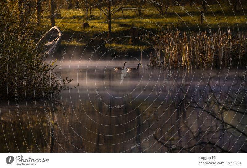 Morgenstimmung am Weiher Umwelt Natur Landschaft Pflanze Tier Wasser Sonnenaufgang Sonnenuntergang Frühling Sommer Schönes Wetter Seeufer Moor Sumpf Teich Gans
