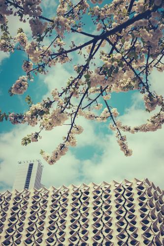 Dufte Stadt weiß Baum Haus Umwelt Architektur Blüte Frühling Gebäude Fassade Stadtleben Wachstum modern retro Kultur Blühend