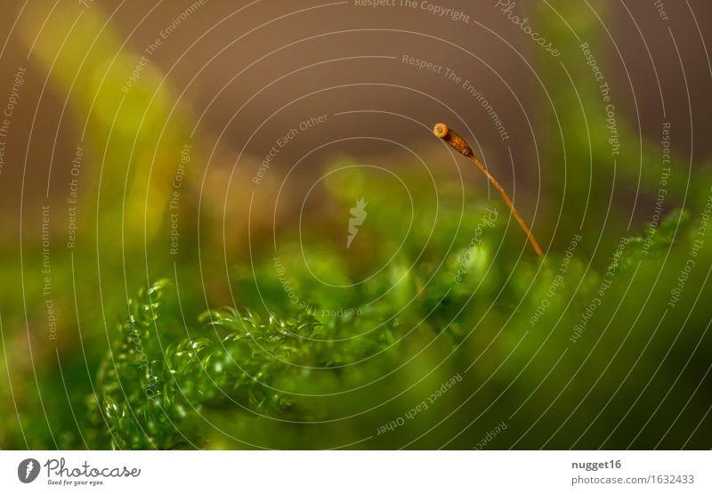 allein und verlassen Natur Pflanze grün Sommer Einsamkeit ruhig Wald Umwelt Frühling Herbst Wiese natürlich Stimmung orange Park Zufriedenheit