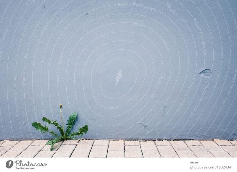 Die herausragende Ursula Pflanze blau Blume Einsamkeit Umwelt Wand Hintergrundbild Mauer grau Stadtleben wild Wachstum Kraft authentisch Platz Fußweg