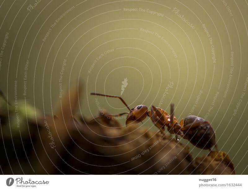 nützliche Winzlinge Umwelt Natur Tier Erde Frühling Sommer Herbst Park Wald Wildtier Ameise 1 Bewegung braun grün Willensstärke friedlich ruhig Entschlossenheit
