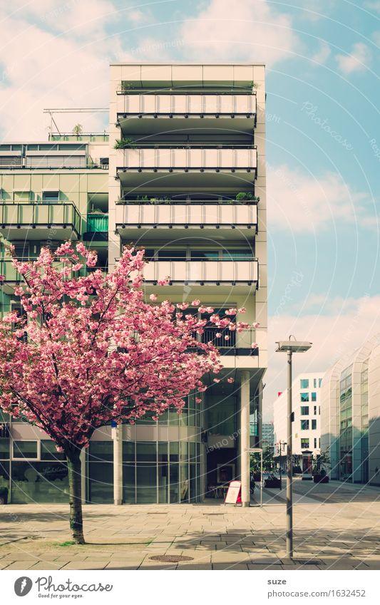 Stadtblüher Baum Haus Umwelt Architektur Blüte Frühling Gebäude Fassade rosa Stadtleben Wohnung Häusliches Leben retro Blühend Vergangenheit