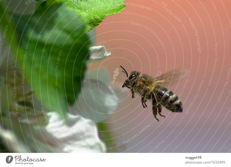 Was wären wir ohne sie? Natur Pflanze grün weiß Baum ruhig Tier Umwelt Blüte Bewegung natürlich Garten fliegen braun rosa Park