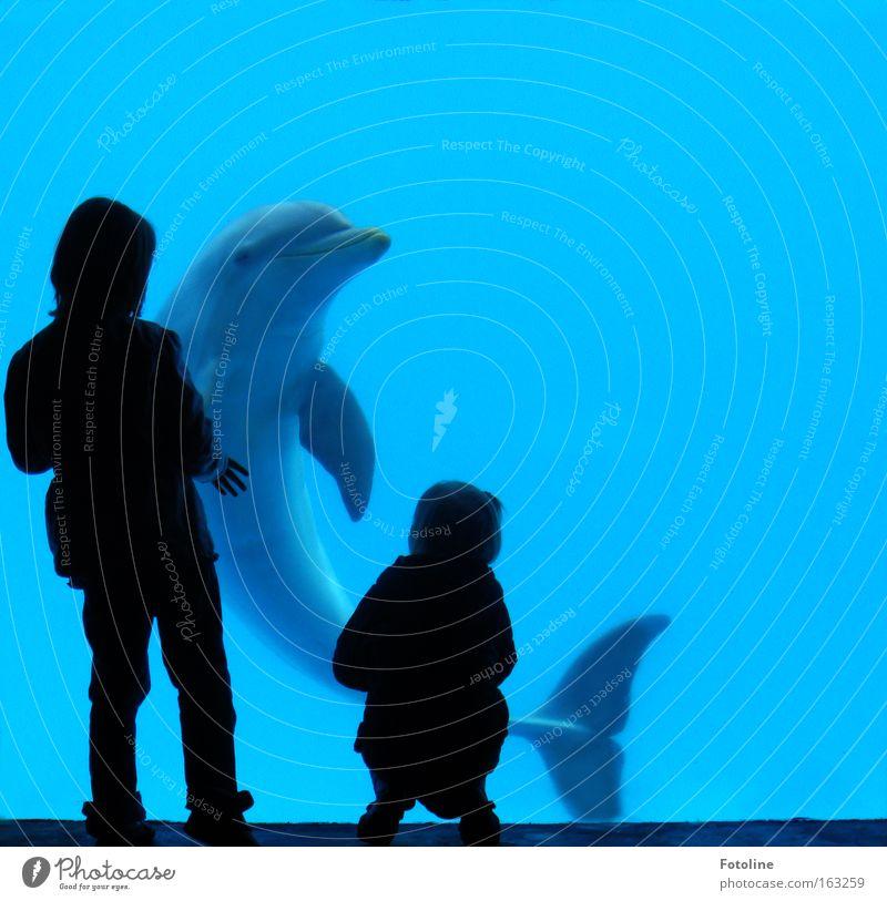 Flipper Kind Schatten Delphine Wasser Meer Tier gefangen Trauer Ferien & Urlaub & Reisen Spanien Säugetier klug