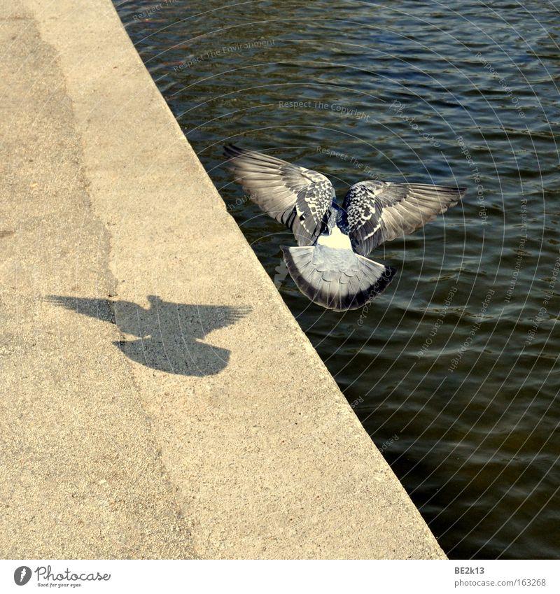 Abgehoben blau Wasser schön Freiheit grau Sand Küste Vogel Wellen fliegen nass groß Luftverkehr Ecke Feder lang