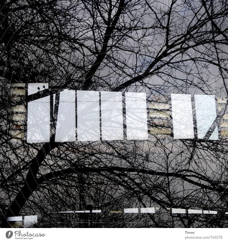 Fabrikauge Baum Winter dunkel Herbst Fenster trist Ast Quadrat durchsichtig Fensterscheibe chaotisch Zweig Fabrikhalle verzweigt