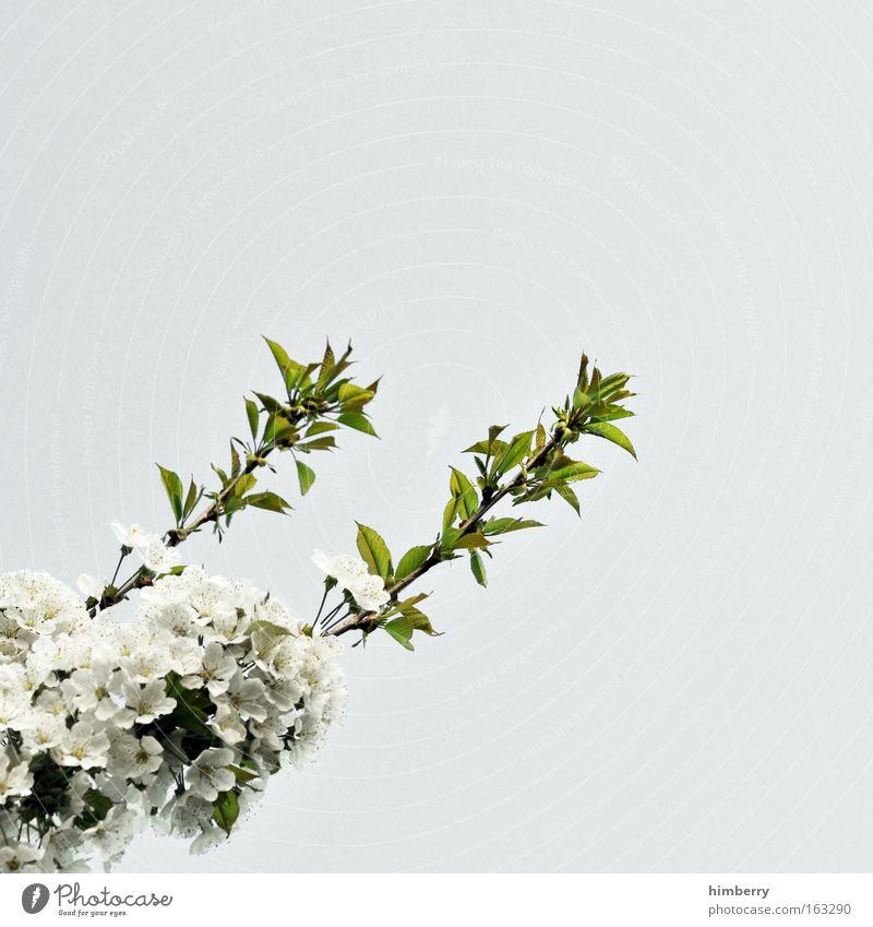 doppeltriebwerk Natur schön Himmel weiß Baum Blume grün Pflanze Blüte Frühling grau Park frisch ästhetisch Wachstum Sauberkeit