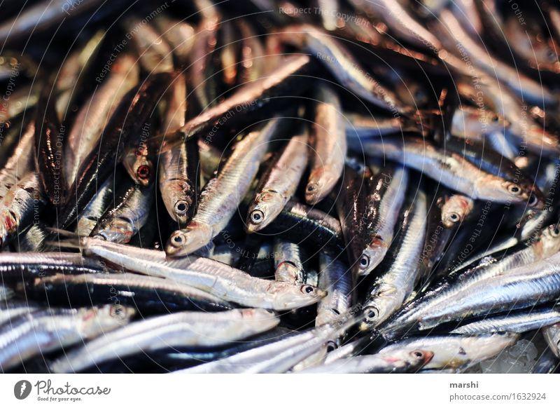 Sardellen Tier Totes Tier Fisch Stimmung Portugal Markt sardellen Sardinen fischig klein Fischmarkt Algarve lecker Lebensmittel Ernährung Gesunde Ernährung