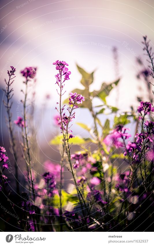 auf Augenhöhe elegant Stil Natur Pflanze Sonne Sommer Schönes Wetter Blume Gras Sträucher Blatt Blüte Grünpflanze Wildpflanze Blütenpflanze Blütenstauden