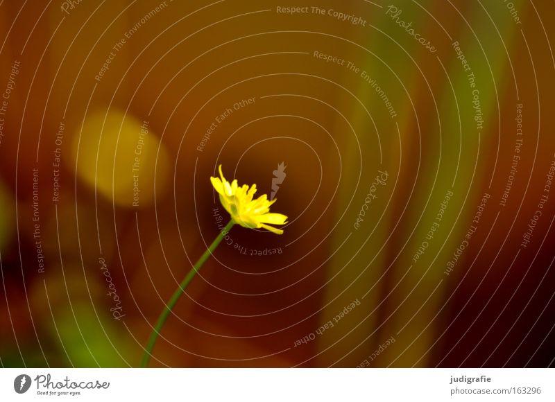 Wiese Natur Blume grün Pflanze Einsamkeit Farbe Frühling klein Umwelt Wachstum zart