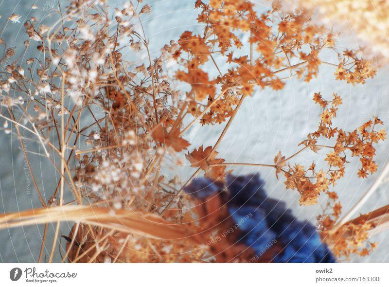 Solea Natur schön weiß Pflanze Blüte Gras Traurigkeit Stimmung braun klein Design elegant ästhetisch Wandel & Veränderung Dekoration & Verzierung dünn