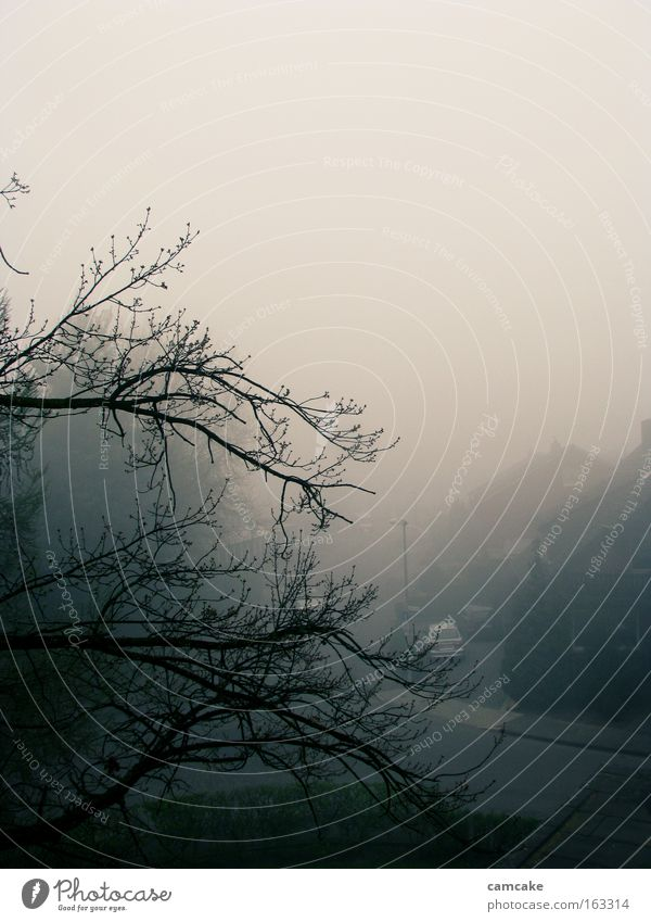 nebel 1 schön Himmel Baum blau Haus schwarz Straße Nebel Aussicht Dach Ast Hochformat