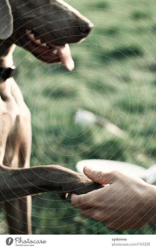 [DD|Apr|09] Küss die Hand Wiese Vertrauen Mensch Unschärfe Wachsamkeit Hund hören Natur gehorchen Hände schütteln Begrüßung Ritual Freundschaft Begleiter Treue