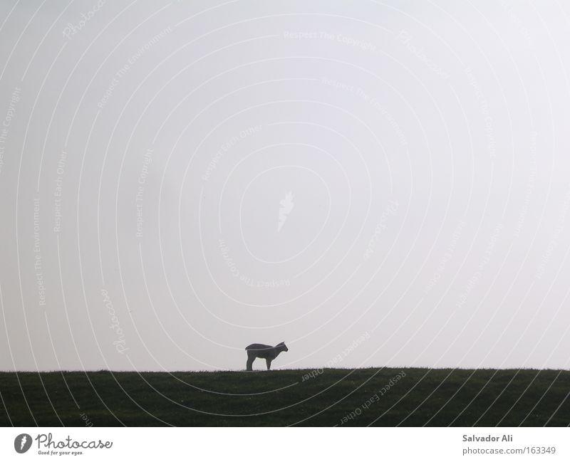 Bock auf Schaf Einsamkeit Deich Nordsee Nordseeküste Lamm Meer Frühling Wolle Osterlamm warten weich Husum Strand Küste blöken