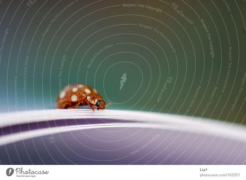 Lesezeichen Käfer Marienkäfer Insekt Buch Buchseite klein niedlich orange rot Detailaufnahme krabbeln Brennpunkt Anomalie Linie Punkt Bildung Makroaufnahme