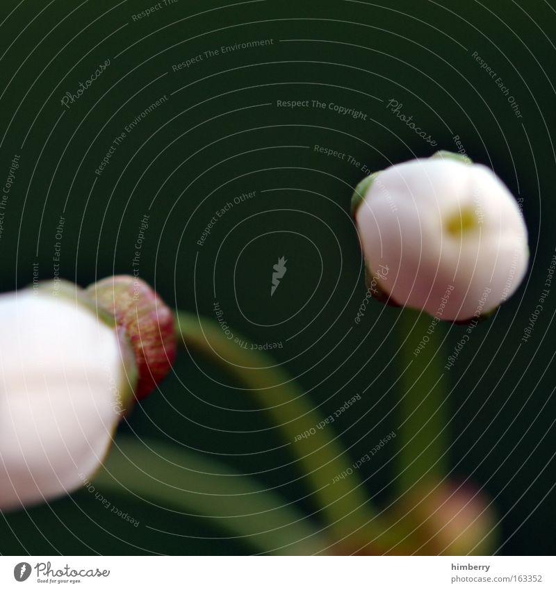 to look away Natur schön weiß Blume grün Pflanze Blüte Frühling Park frei frisch ästhetisch Wachstum einzigartig wild natürlich