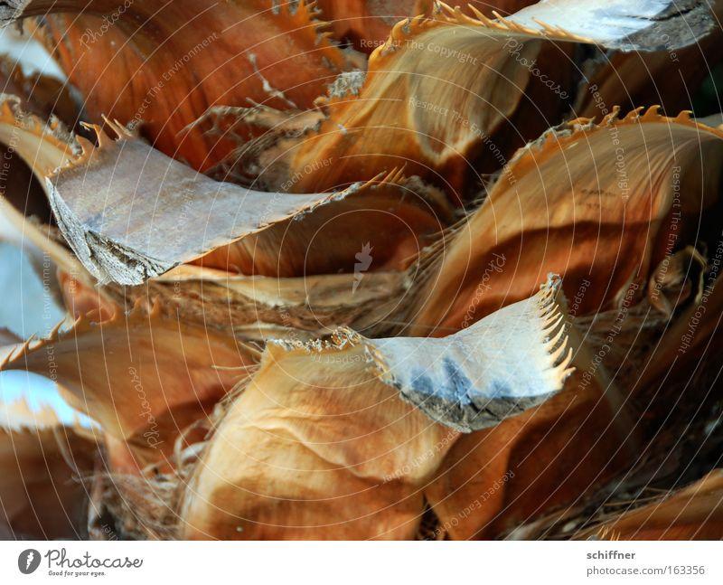 Waschen, Schneiden und Legen bitte Baum Sträucher dünn trocken Palme Baumstamm chaotisch durcheinander unordentlich
