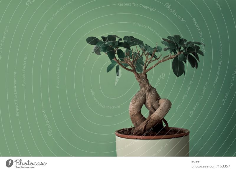 Bonsai Topf Stil Design Leben Zufriedenheit Freizeit & Hobby Dekoration & Verzierung Kunst Kultur Natur Pflanze Baum Blatt klein grün Japan China Asien Botanik