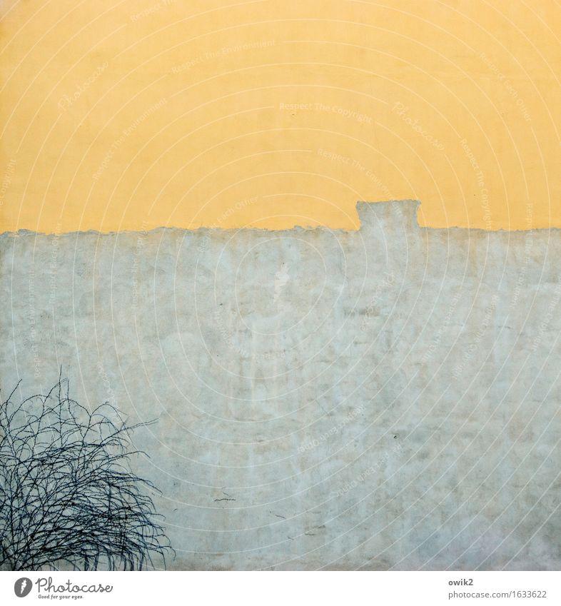 Häusliches Leben Pflanze Efeu Kletterpflanzen Bautzen Deutschland Lausitz Kleinstadt Bauwerk Gebäude Mauer Wand Fassade Wachstum einfach historisch Stadt blau