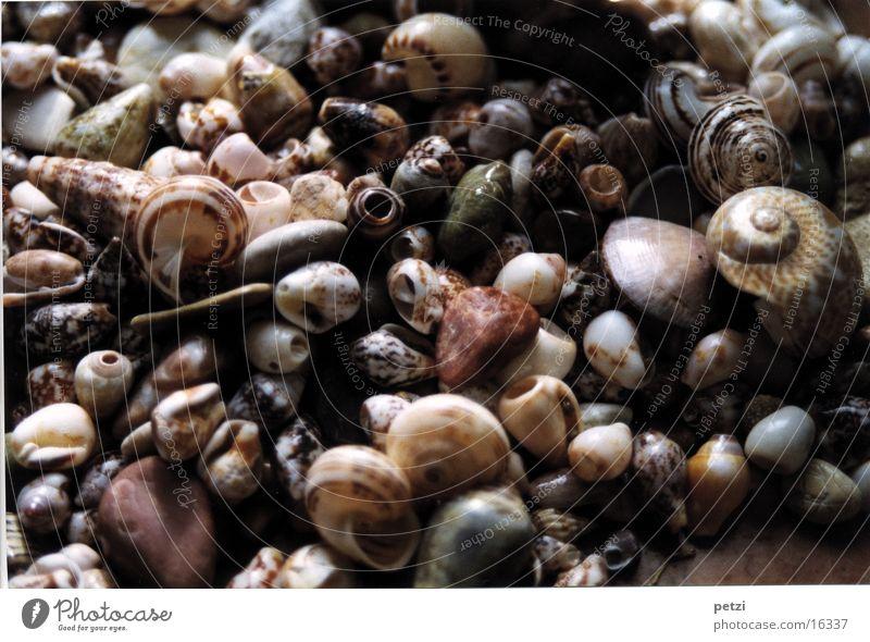 Muscheln & Steinchen Schnecke gedreht Spirale Muster verschiebene Formen gesprenkelt