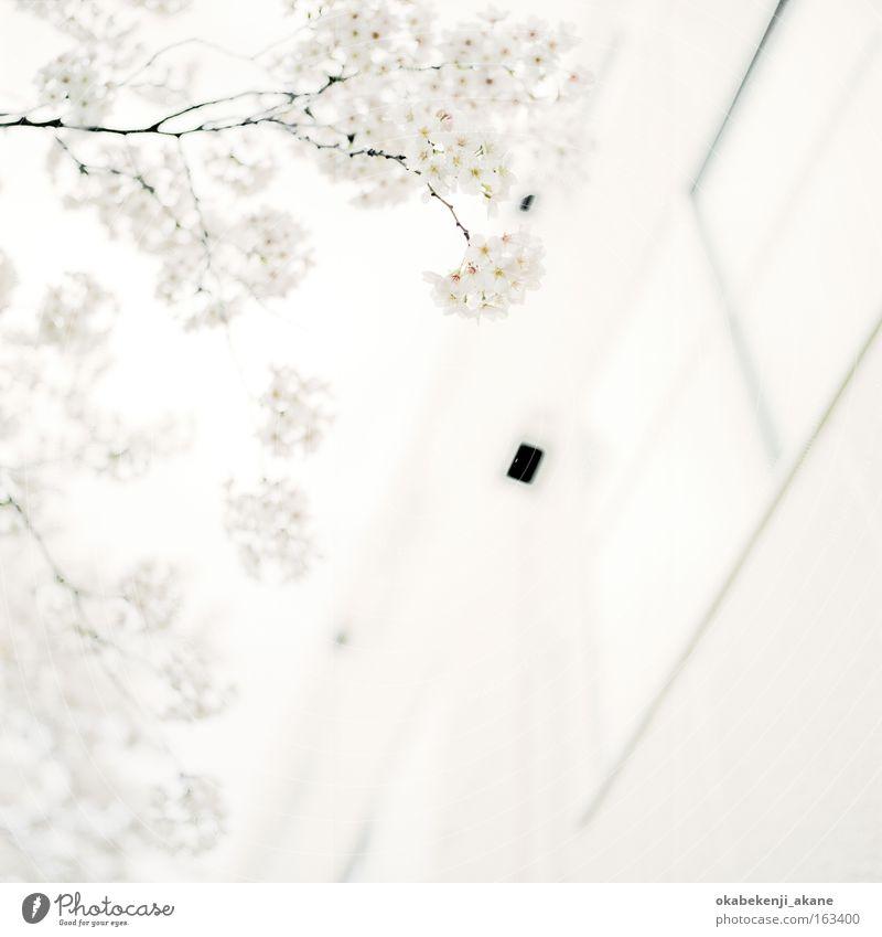 albino #3 Tokyo Schererei Quadrat Filmindustrie Licht Luft Japan Stimmungsbild weiß bleich
