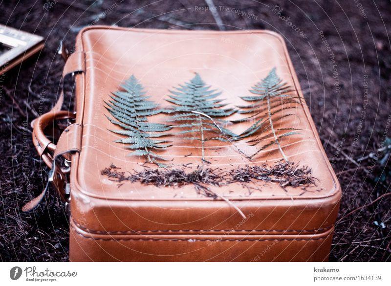 Farn in the woods Freiheit Koffer Ferien & Urlaub & Reisen Natur Pflanze Gras Grünpflanze Nutzpflanze Wildpflanze Wald Waldboden Verliebtheit Romantik Abenteuer