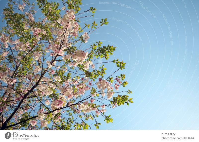 alle jahre wieder Himmel Natur blau schön Baum Pflanze Sommer Blume Erholung Frühling Freiheit Blüte Park Stimmung Hintergrundbild Wetter