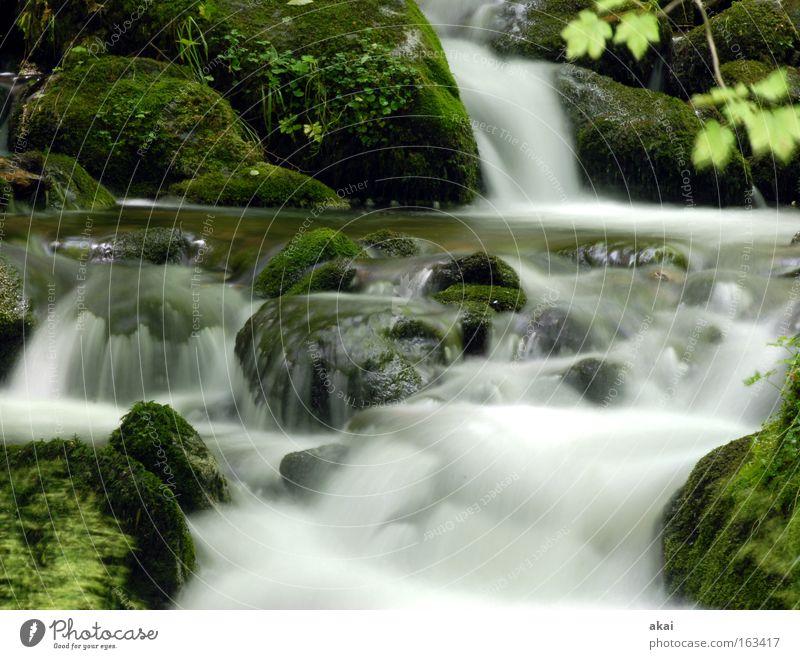 Rauschen Wasserfall Wildbach Bach Langzeitbelichtung weich Fluss graufilter Schwarzwald Wildwasser Gebirgsfluß Gischt Strömung reißend Dreisam Naturschutzgebiet