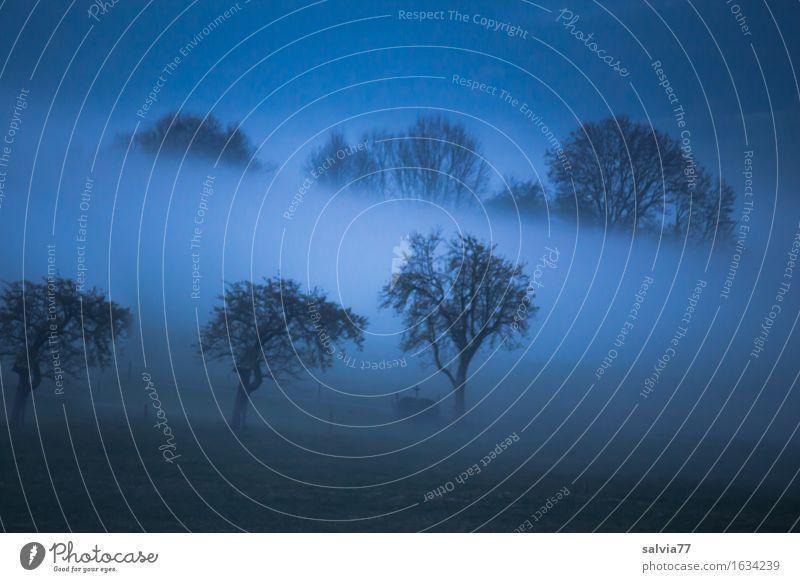 Morgenstund Umwelt Landschaft Herbst Wetter Nebel Baum Feld Wald blau grau schwarz Idylle Nebelstimmung Morgennebel Farbfoto Gedeckte Farben Außenaufnahme