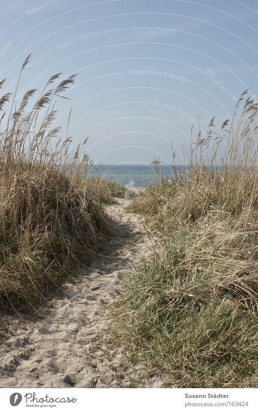 Tag am Meer See Wasser Rauschen nass Wind Farn Sand Fuß Zufriedenheit träumen Segel Strand Einsamkeit gehen Wege & Pfade Glück Horizont Ziel Stranddüne Düne