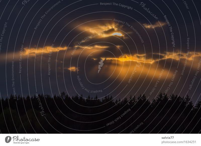Da oben ist noch Licht an Umwelt Landschaft Luft Himmel Wolken Gewitterwolken Sonne Sonnenaufgang Sonnenuntergang Klima Wetter schlechtes Wetter gold grau
