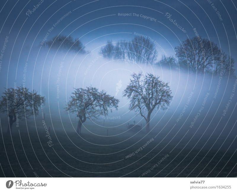 kein Durchblick Natur Landschaft Herbst Klima Wetter Nebel Baum frisch grau Stimmung ruhig Frieden Hoffnung Idylle Vergänglichkeit träumen Morgen abstrakt