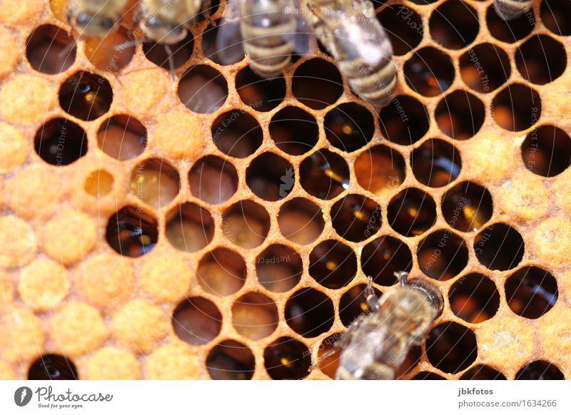 Bienenbrut Lebensmittel Ernährung Freude Glück schön Körperpflege Freizeit & Hobby Umwelt Natur Tier Nutztier Wildtier Tierjunges Tierfamilie trendy Erotik süß