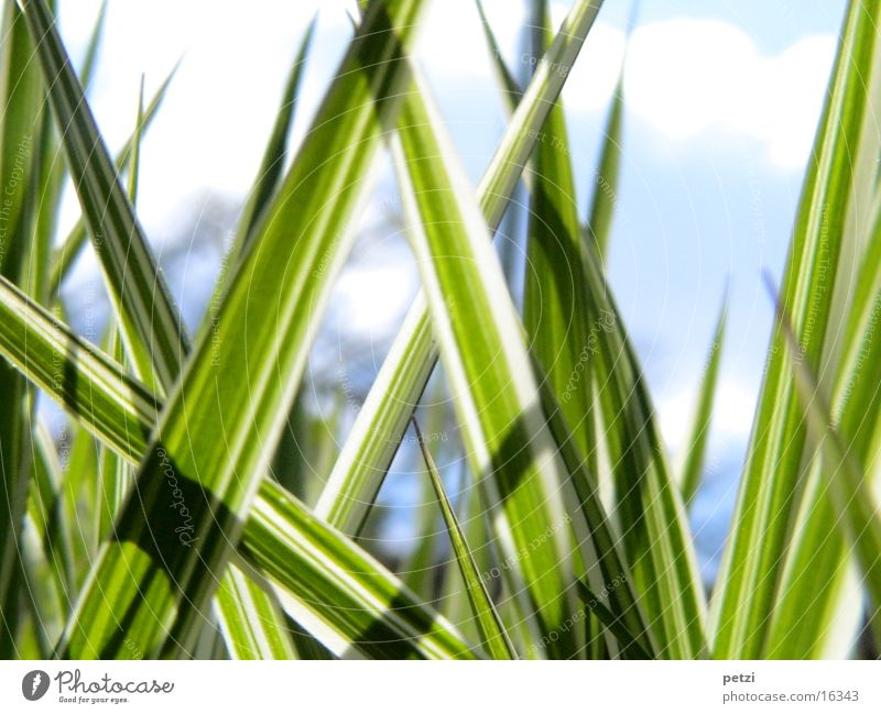 Streifengras Himmel weiß grün dunkel Gras Linie hell