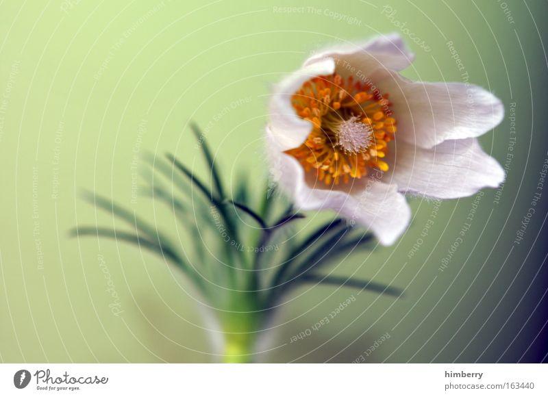 i can stand the storm Natur schön Blume Pflanze ruhig Erholung Blüte Frühling Park frisch ästhetisch Wachstum Dekoration & Verzierung Blühend Duft Jahreszeiten