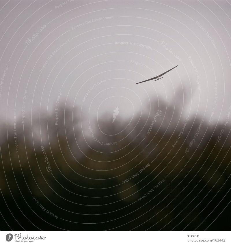 SONNTAGSAUSFLUG Flugzeug Segelfliegen Segelflugzeug Gleitflug Schweben Wolken Himmel Hecke Sträucher Vogel Luftverkehr Freizeit & Hobby gleiter
