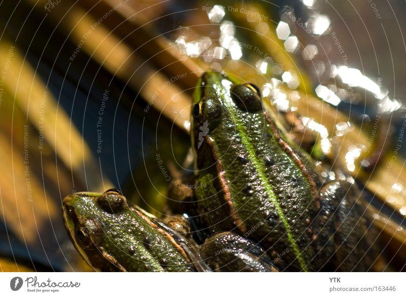 Streit? Natur grün Sonne Tier Erholung Frühling Garten Freundschaft Zusammensein glänzend Tierpaar Wildtier nass Wut Meinung Teich