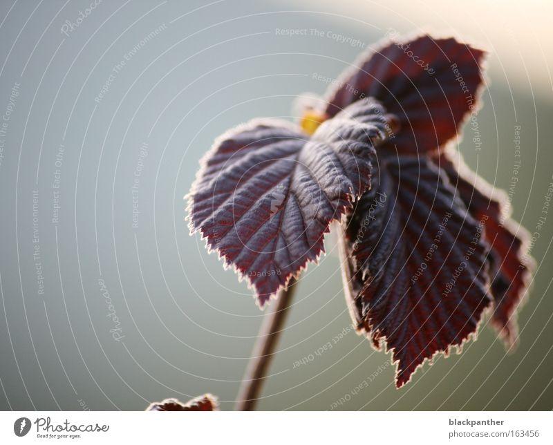 Frühlingslaune Natur Pflanze rot Blatt Park Stimmung Lichtspiel