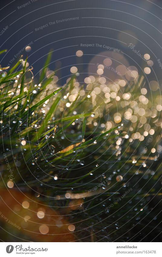 Frühlingsmorgen Sommer Wasser Wiese Gras Regen frisch Wassertropfen nass Rasen Tropfen Tau Blendenfleck Sonnenaufgang