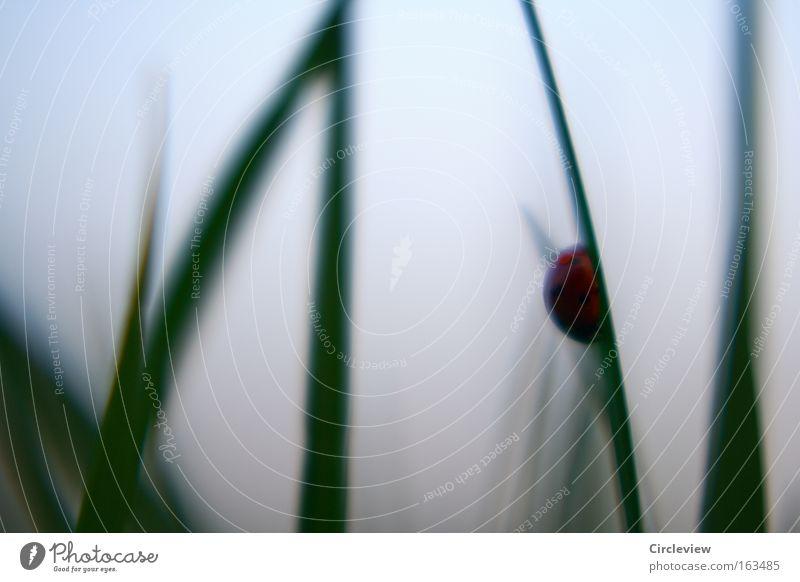 Durchhängen und auf bessere Zeiten warten Natur Gras warten Nebel Trauer feucht Marienkäfer Schwäche widersetzen