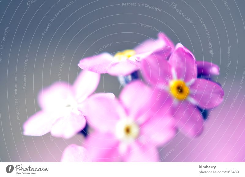 think pink Natur schön Blume Pflanze Sommer Blüte Frühling Glück träumen Zufriedenheit rosa Hoffnung Fröhlichkeit ästhetisch Coolness Wellness