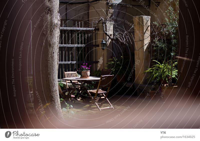 Backyard Pflanze Schönes Wetter Garten Kleinstadt Altstadt Menschenleer Traumhaus Gebäude Mauer Wand Terrasse Zufriedenheit entdecken Erholung