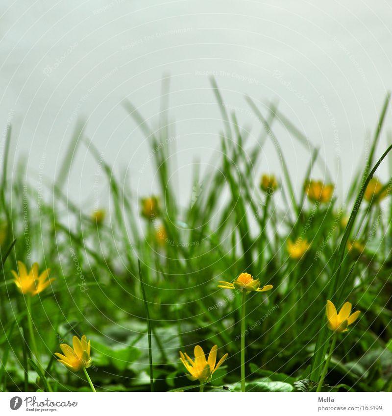 ggg - grün gelb (hell)grau Blume Blüte Gras Wiese Froschperspektive Frühling Blühend Küste Böschung