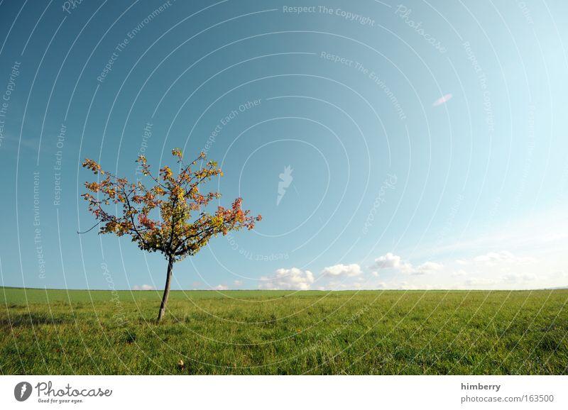 new hope Himmel Natur blau Pflanze grün Sommer Baum Erholung Einsamkeit Landschaft Wolken Wiese Herbst Gras natürlich Freiheit